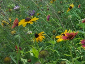 Miscellaneous wildflower photo